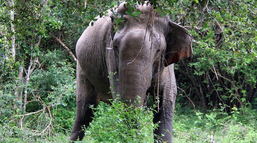essay on save wildlife 150 words