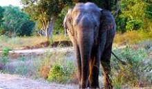 Yala - Sri Lanka