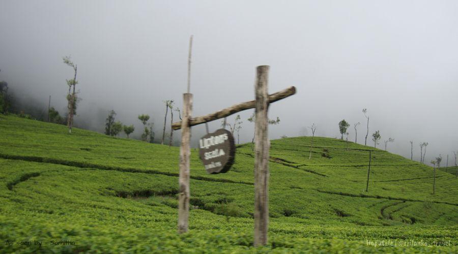 Haputale Sri Lanka Adisham Lipton S Seat Hotels Photos