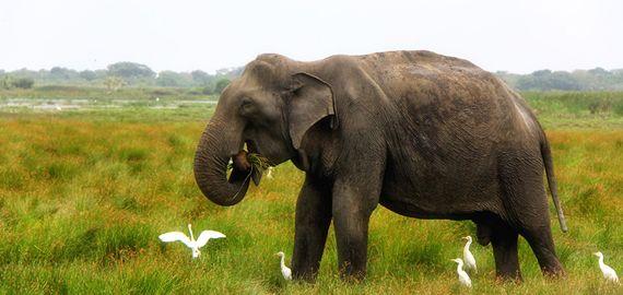 Classic Sri Lanka Tour